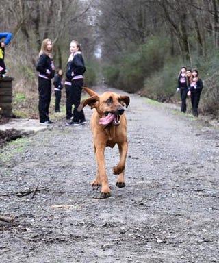 running-dog-marathon-1