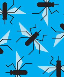 uninvitemosquitos_opener_Elliot_Salazar