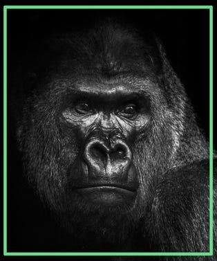 Gorilla_Opener