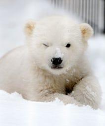 opener_polar