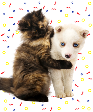 kittyopener