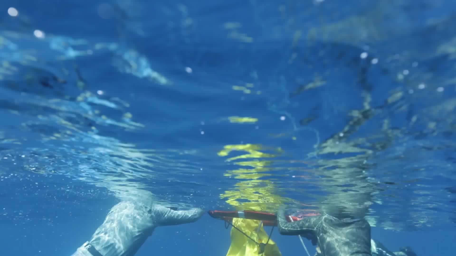 adrian grenier water pollution ocean whales essay