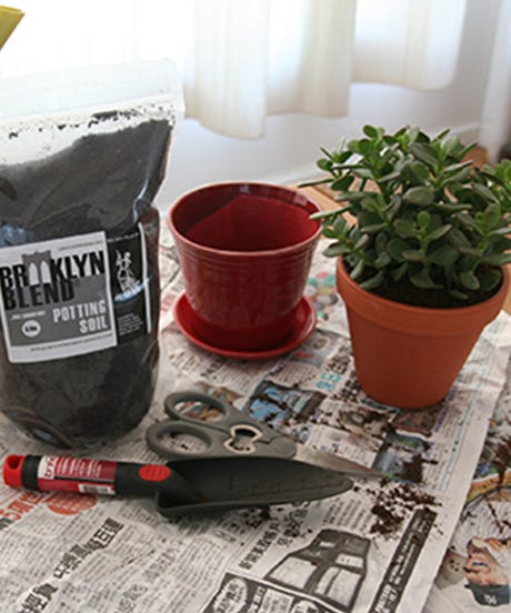 repotting 101 how to stop killing your house plants