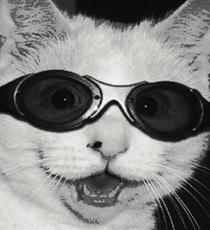 cat opener