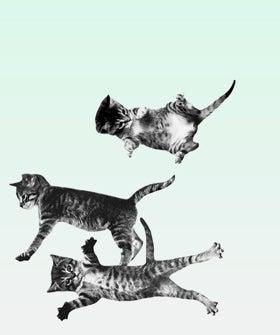 opener-cat-bounce