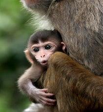 monkeyblog