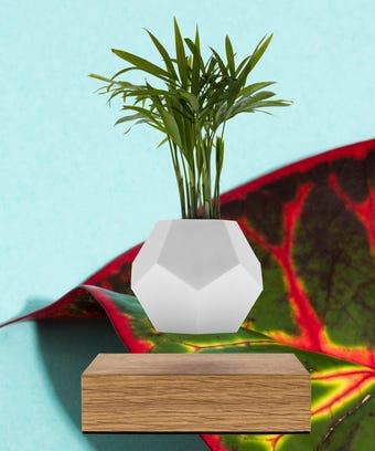House Plants - Indoor Gardening Tips