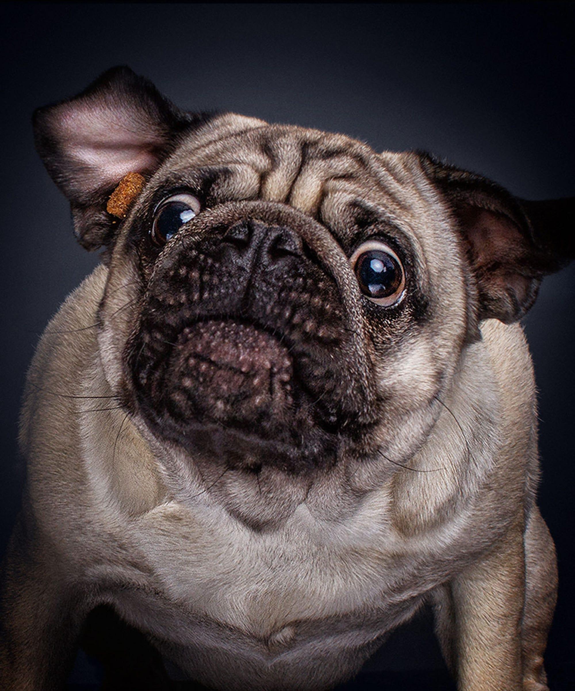 dog-catch-opener