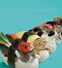 cat-sushi-2