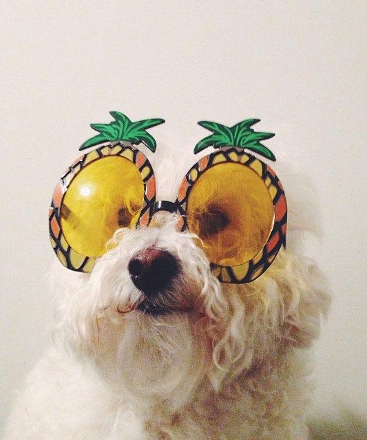 Instagram's Most Aww-Worthy Animals