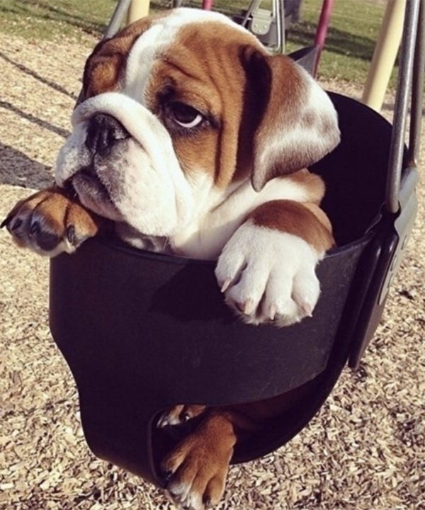dog-instagrams-best-1