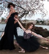 cherry-blossom-main