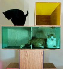 CatShowOpener