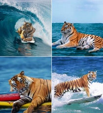 Tigers On Surfboards