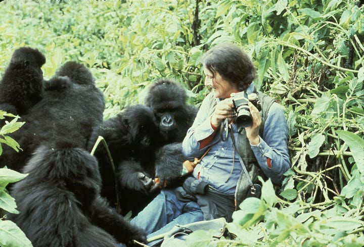 Why was Dian Fossey killed?