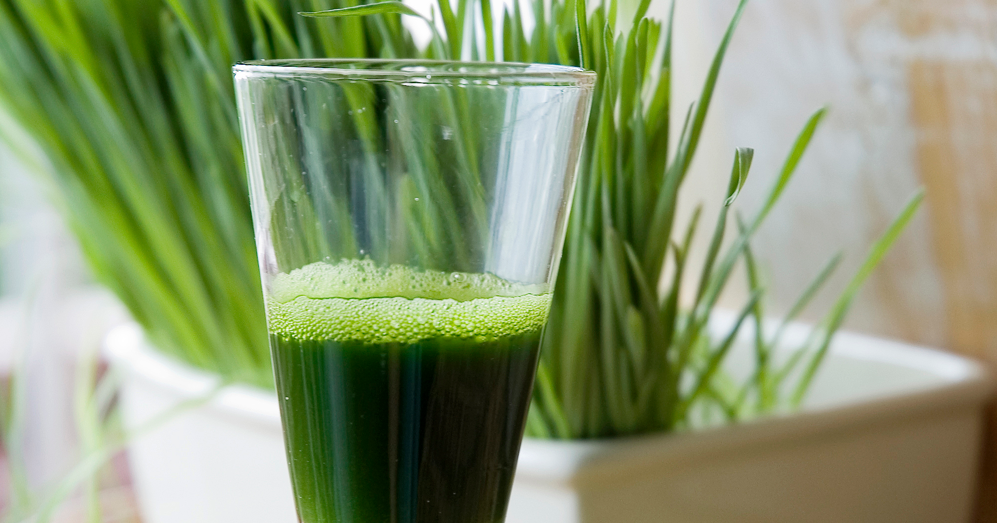 how to know wheatgrass poeder is spoiled