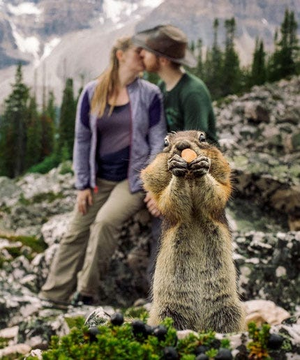 Squirrel Photobomb Engagement Photos