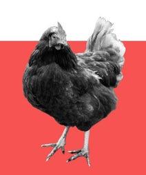 heritage-chicken-opener
