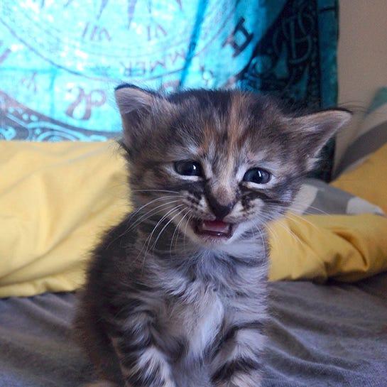 Sad Cat Photos - Cute Kitten Pictures