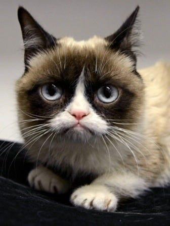 Grumpy Cat 100 Million Dollars Net Worth