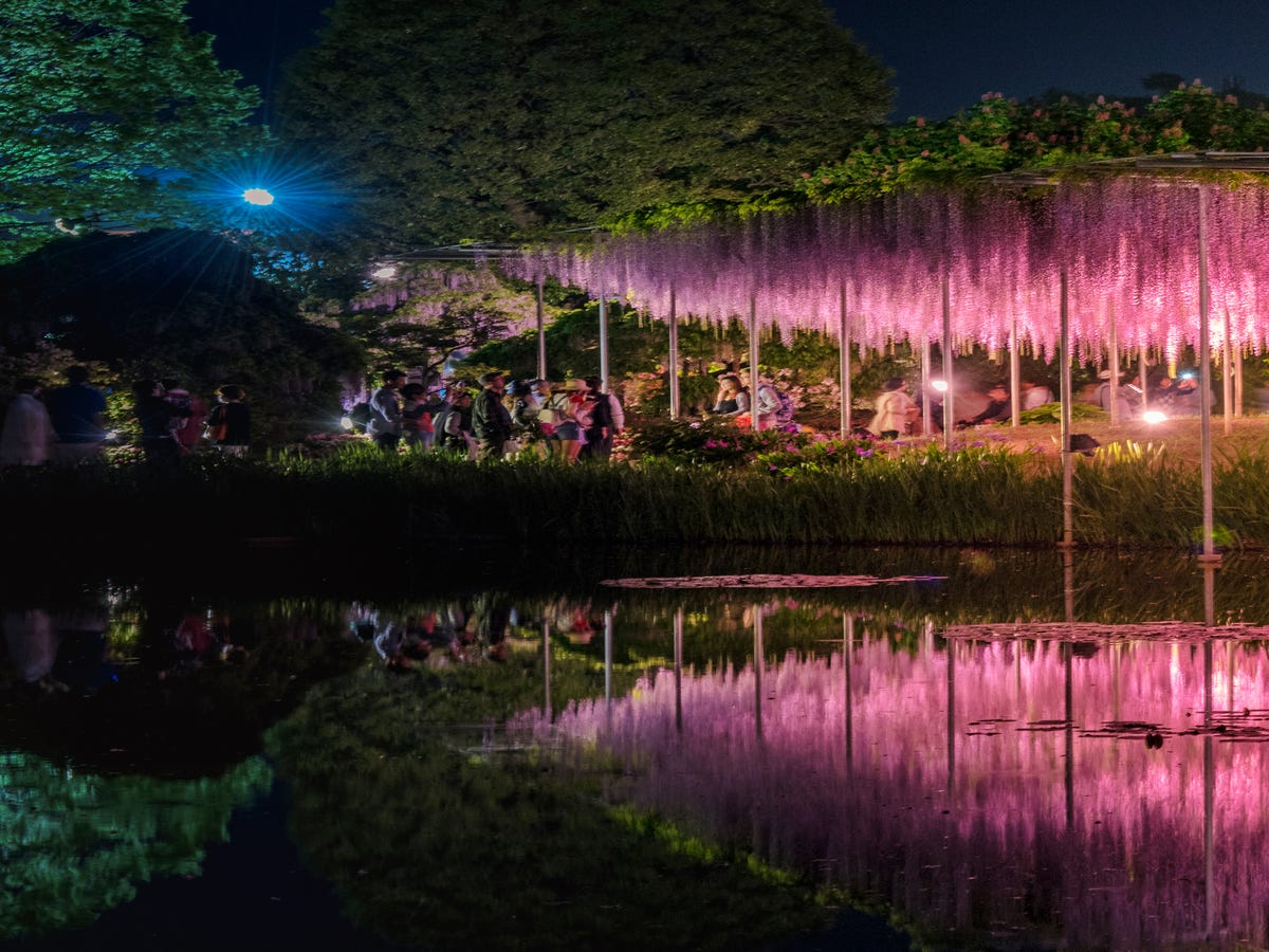 Forget Cherry Blossoms — Japan's Wisteria Gardens Are A Technicolor Must-See