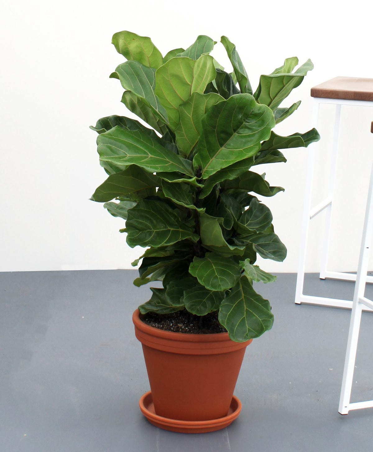 Buying Plants Online: Plant Stores To Order Houseplants