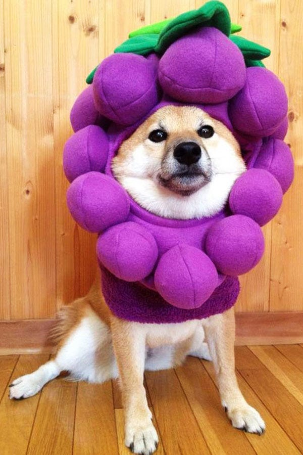 Dogs Wearing Food Costumes For National Dog Day