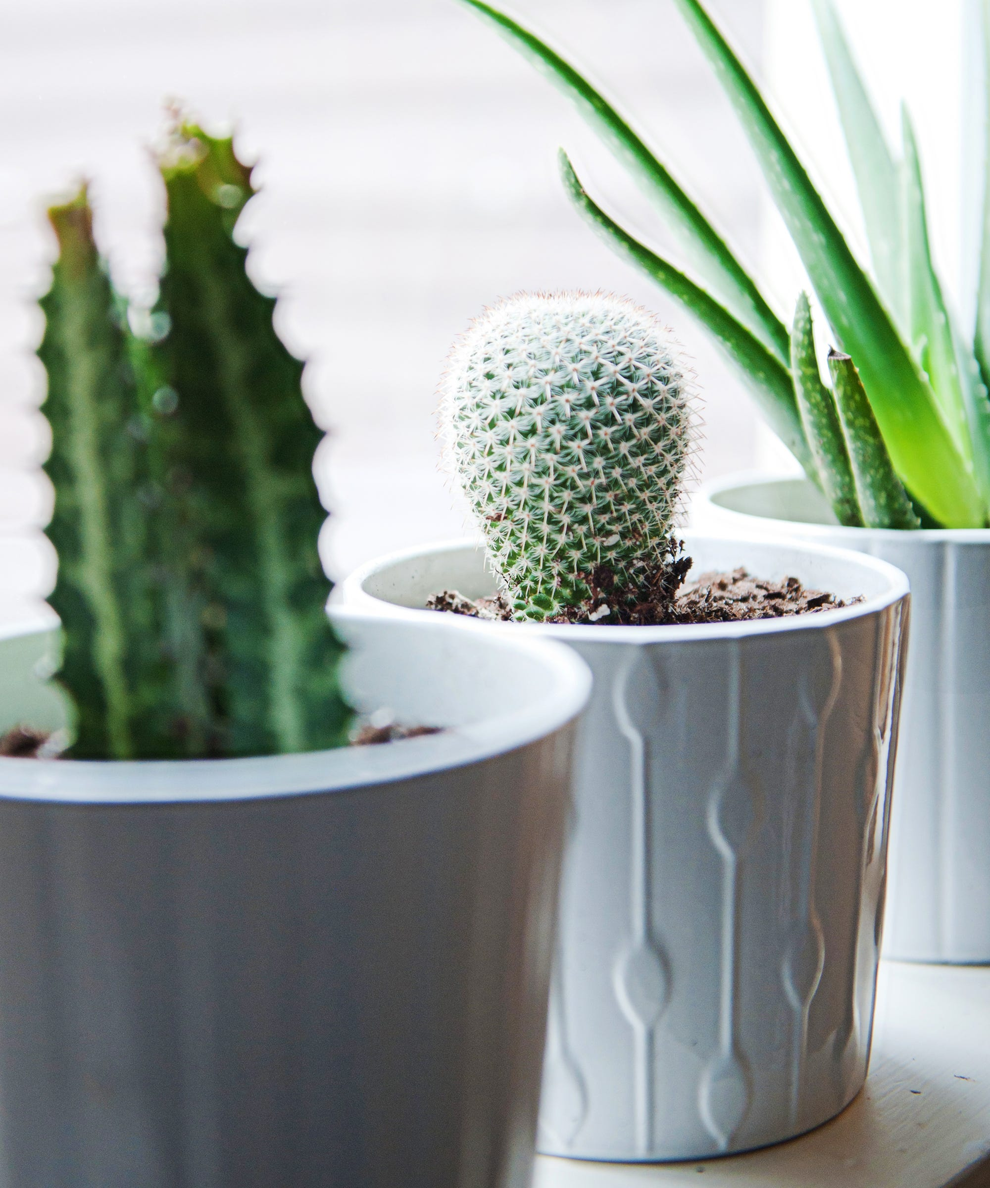 Apartment Gardening Is The Latest Trend In House Plants But What It