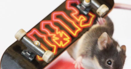 Skateboarding Mouse Is The Best Thing You'll See All Week