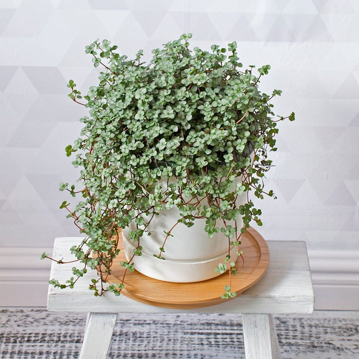 Buying Plants Online Guide - Houseplants, Plant Stores