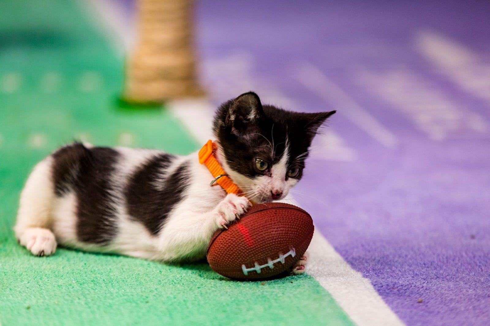 Image result for kitten bowl