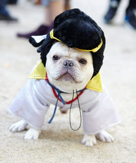 The Clever Dogs Who Won At Halloween