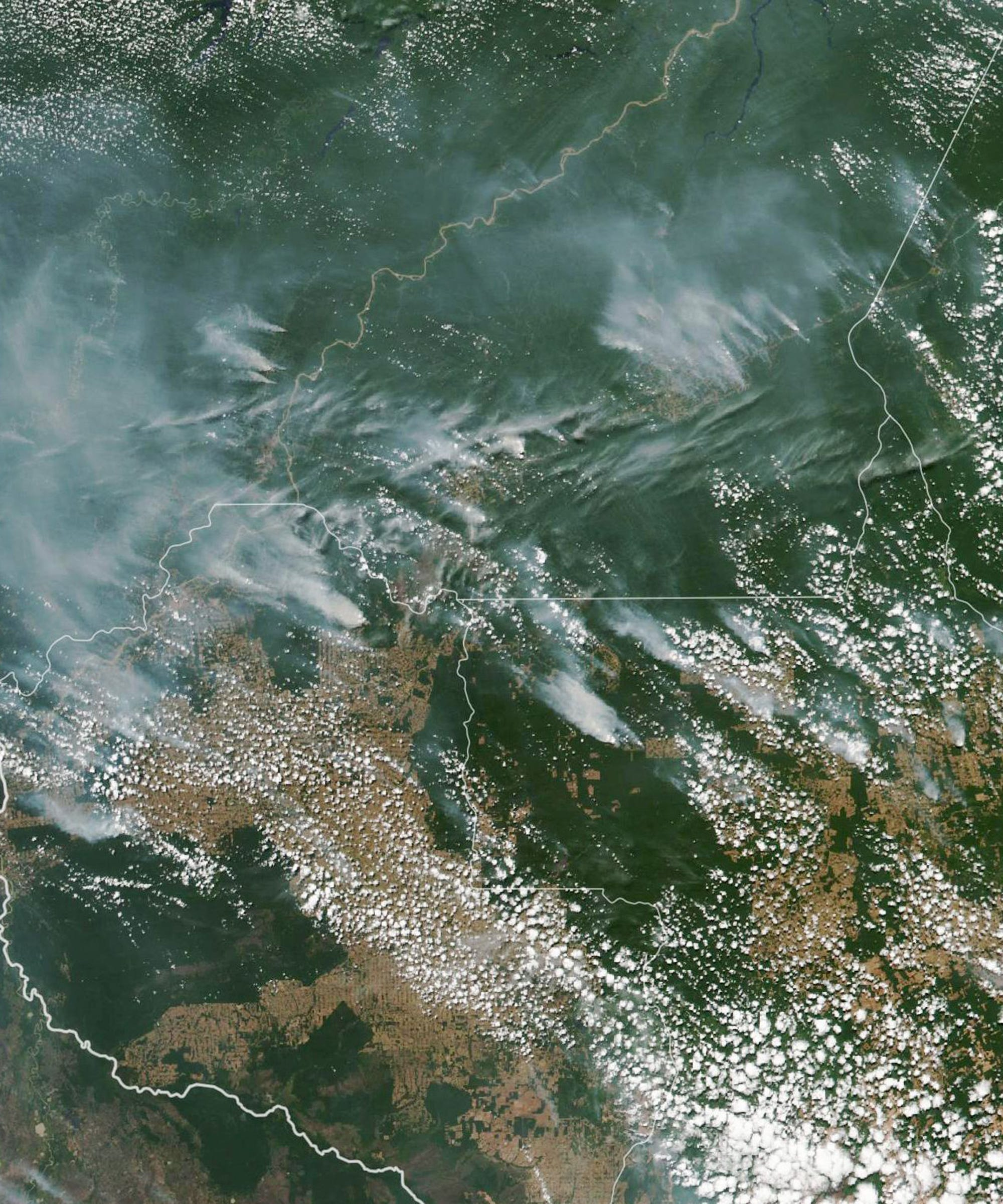 The Amazon Rainforest Is Ablaze — Here's How You Can Help