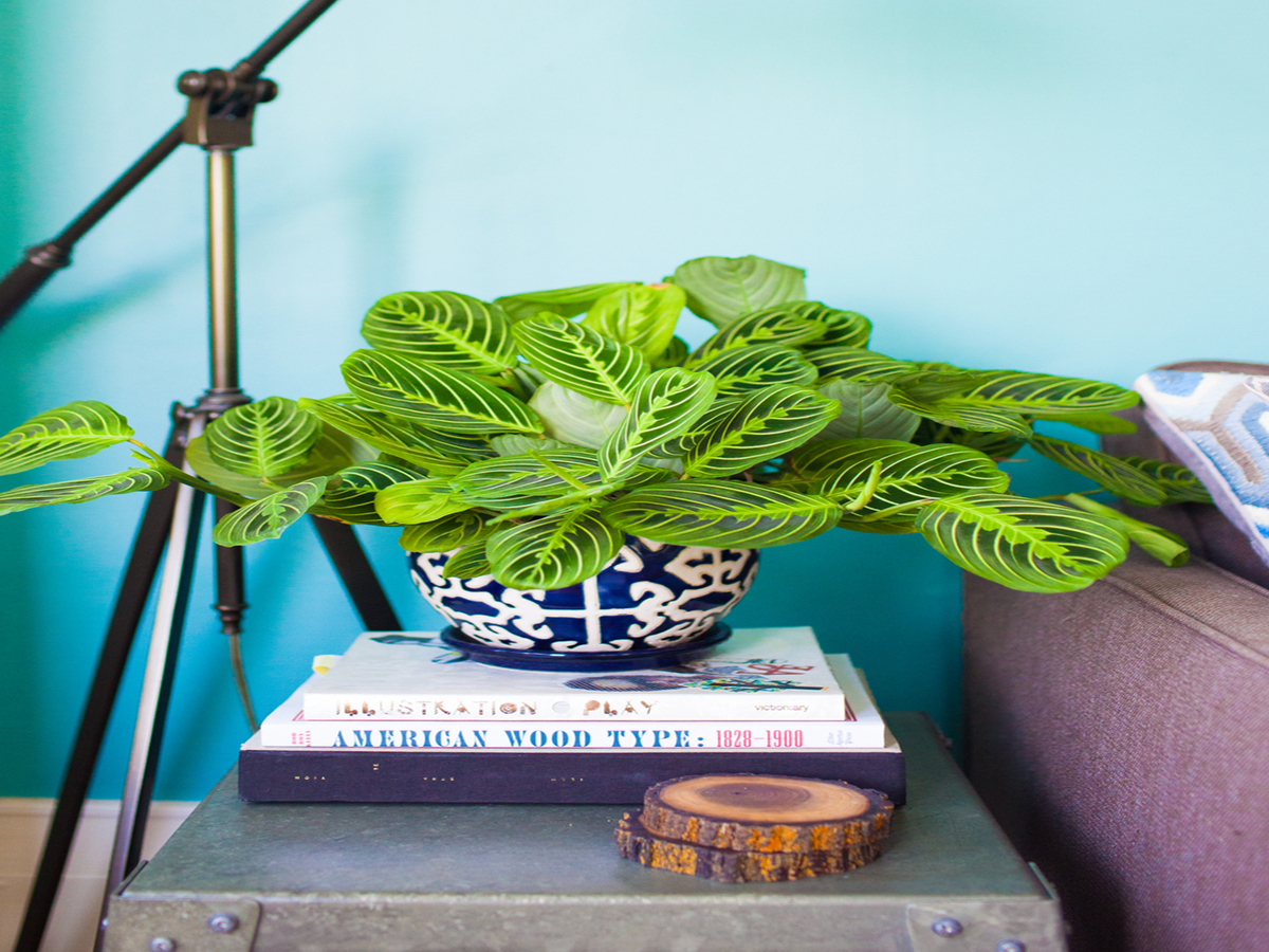 Experts Say These Are The Best, Easiest Houseplants To Own