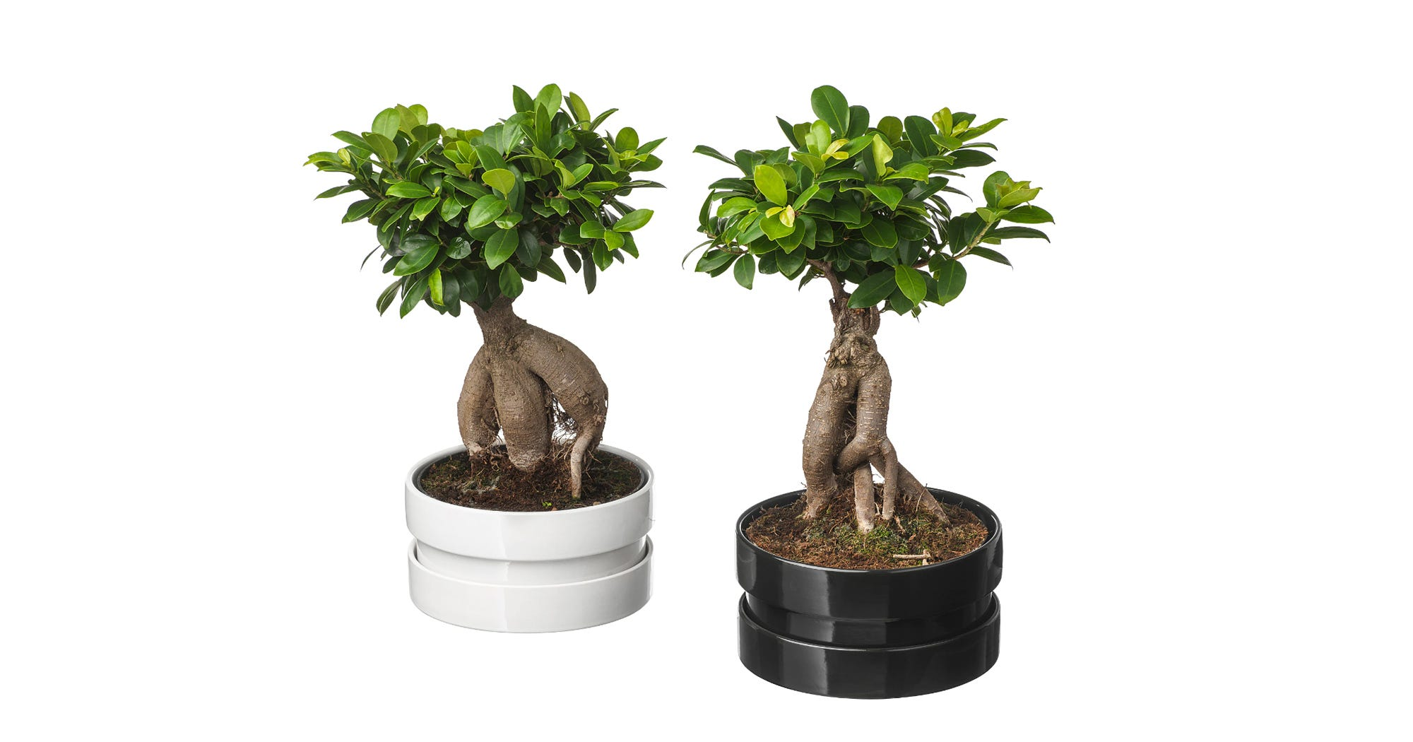Best Ikea Plants Succulents Pots Planter Stands